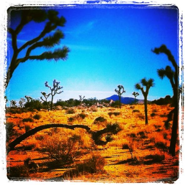 """Delicate Balance"" (Mojave Desert, CA)"