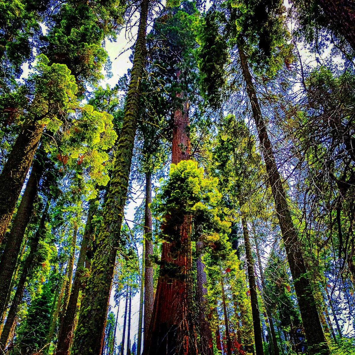 """""""Towers"""" (Sequoia National Park, California)"""