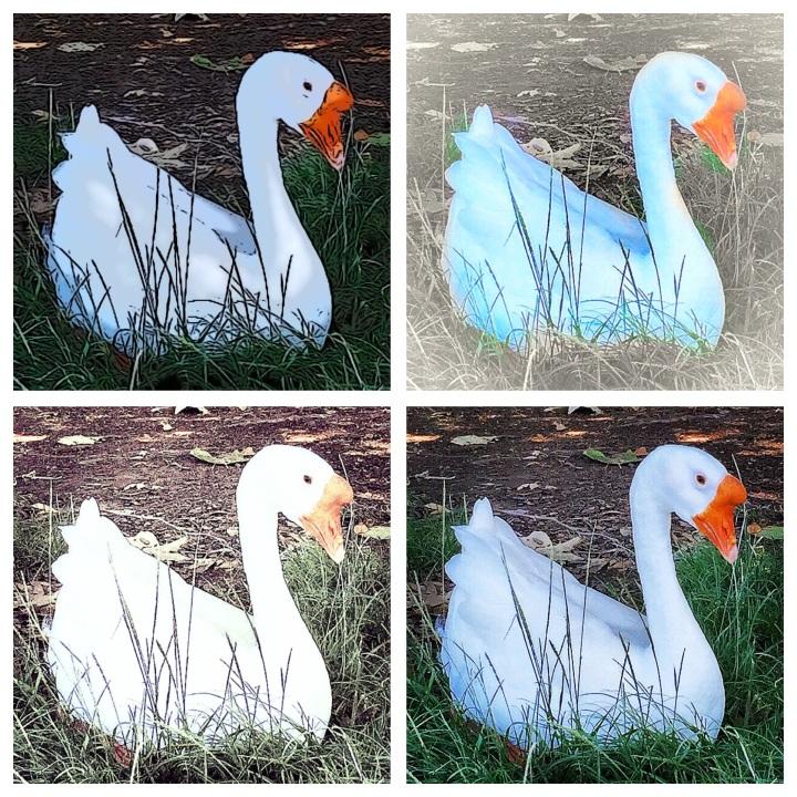 """""""Quack"""" (California, USA)"""