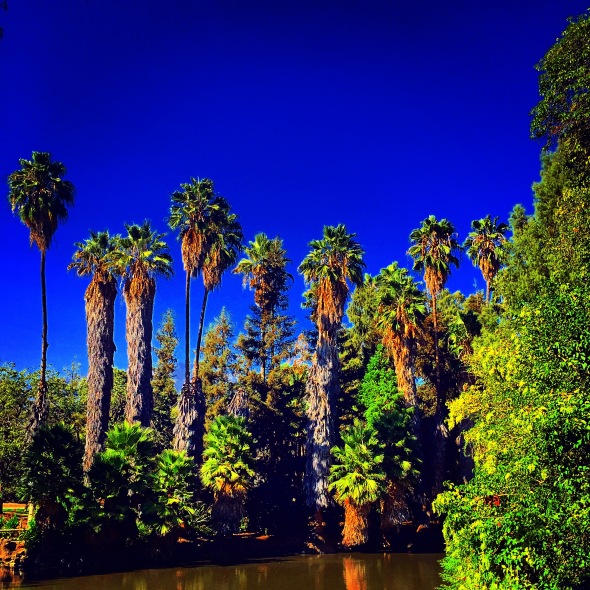 """Palms on the Water"" (Los Angeles, California"""