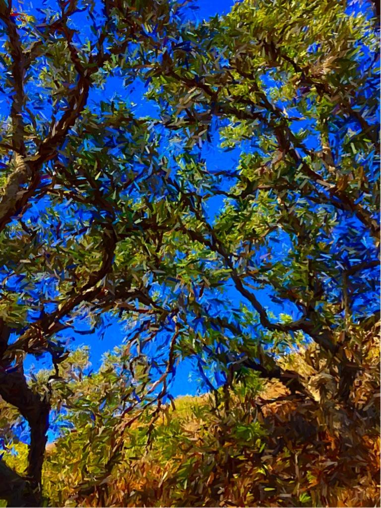 """Through the Eyes"" (Malibu, California"""
