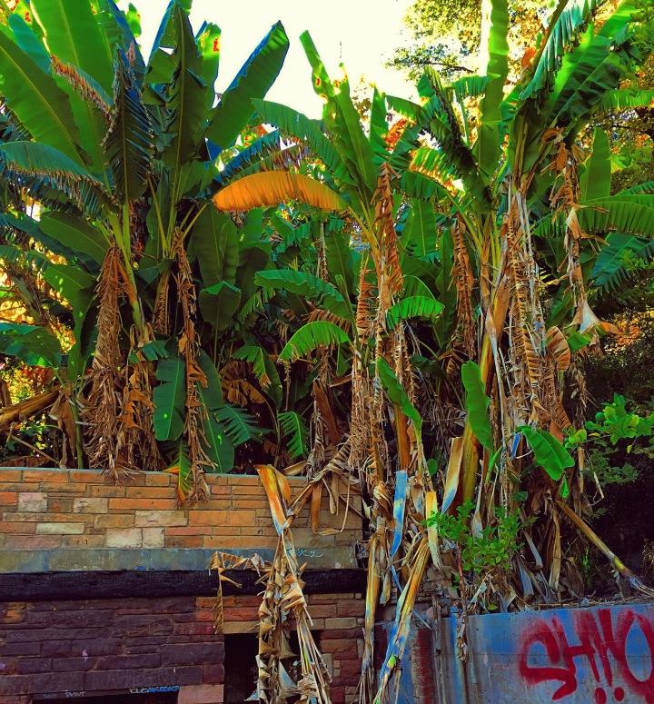"""Fallen Paradise"" (Malibu, California)"