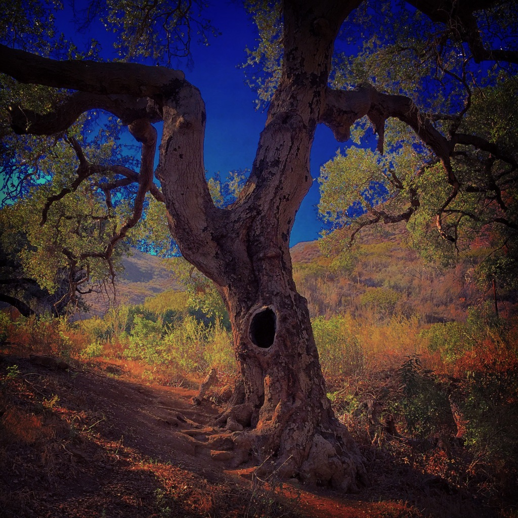 """I Alone am Strong"" (Malibu, California)"