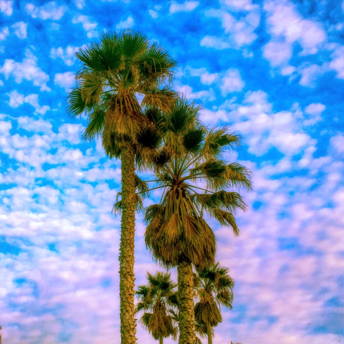 """Across the Sky"" (Ventura County, CA)"