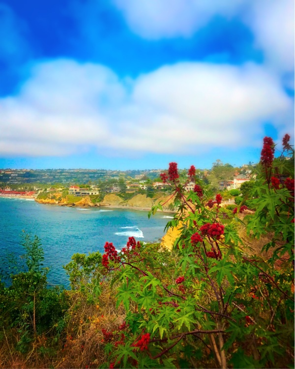 ocean view in La Jolla, California